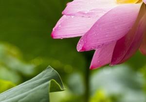Toilette mit lotuseffekt reinigen